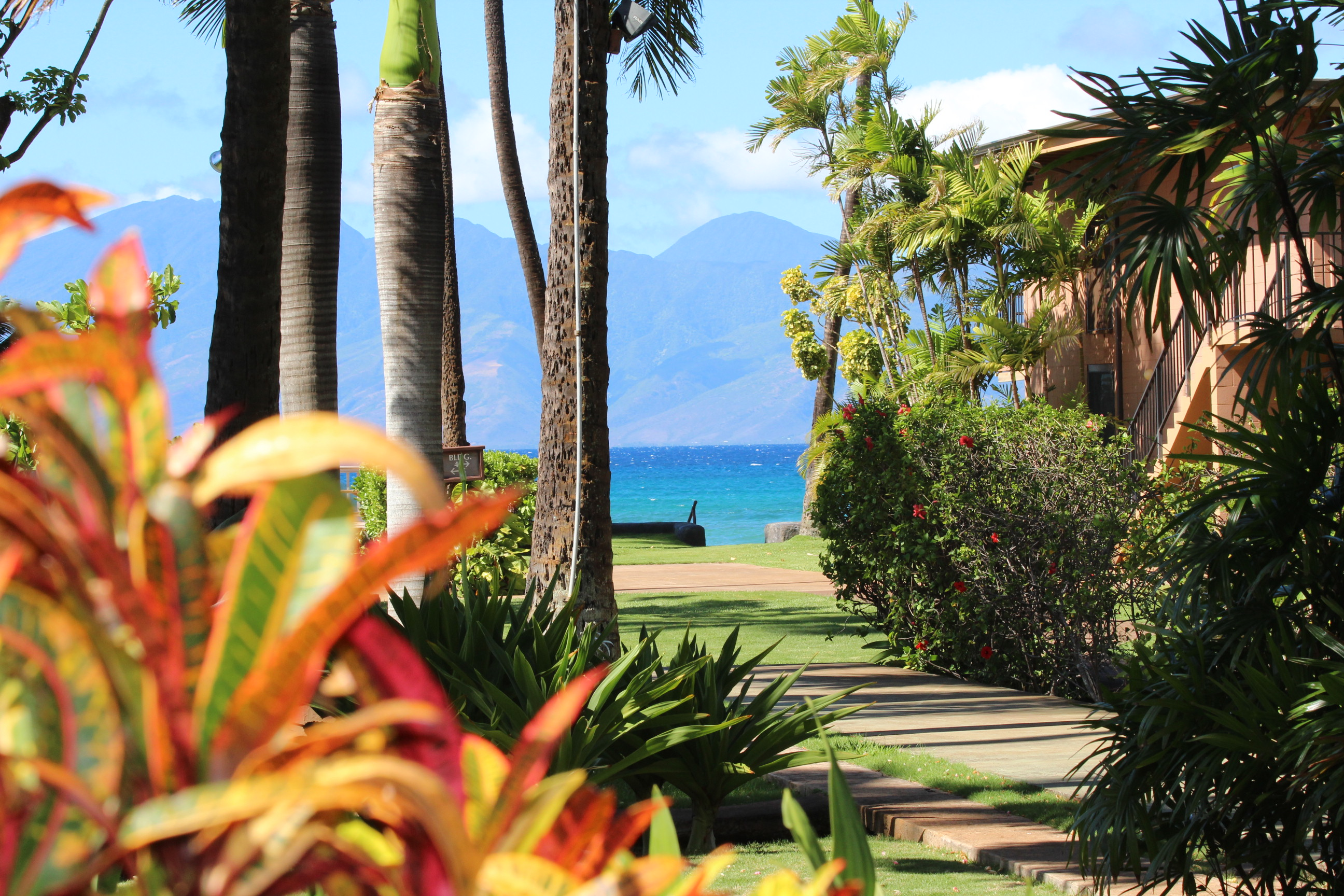 Image of the view from the yard at Maui Sands